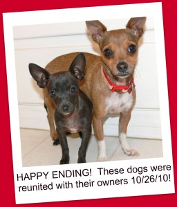 Chihuahuas found home!
