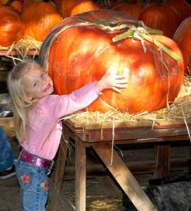 Pumpkin Patches and More...