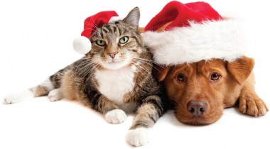 "Adopt a pet and take your pet ""home for the holidays!"""