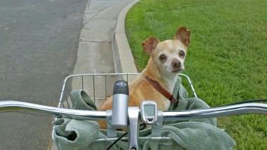 Dynkie in bike basket