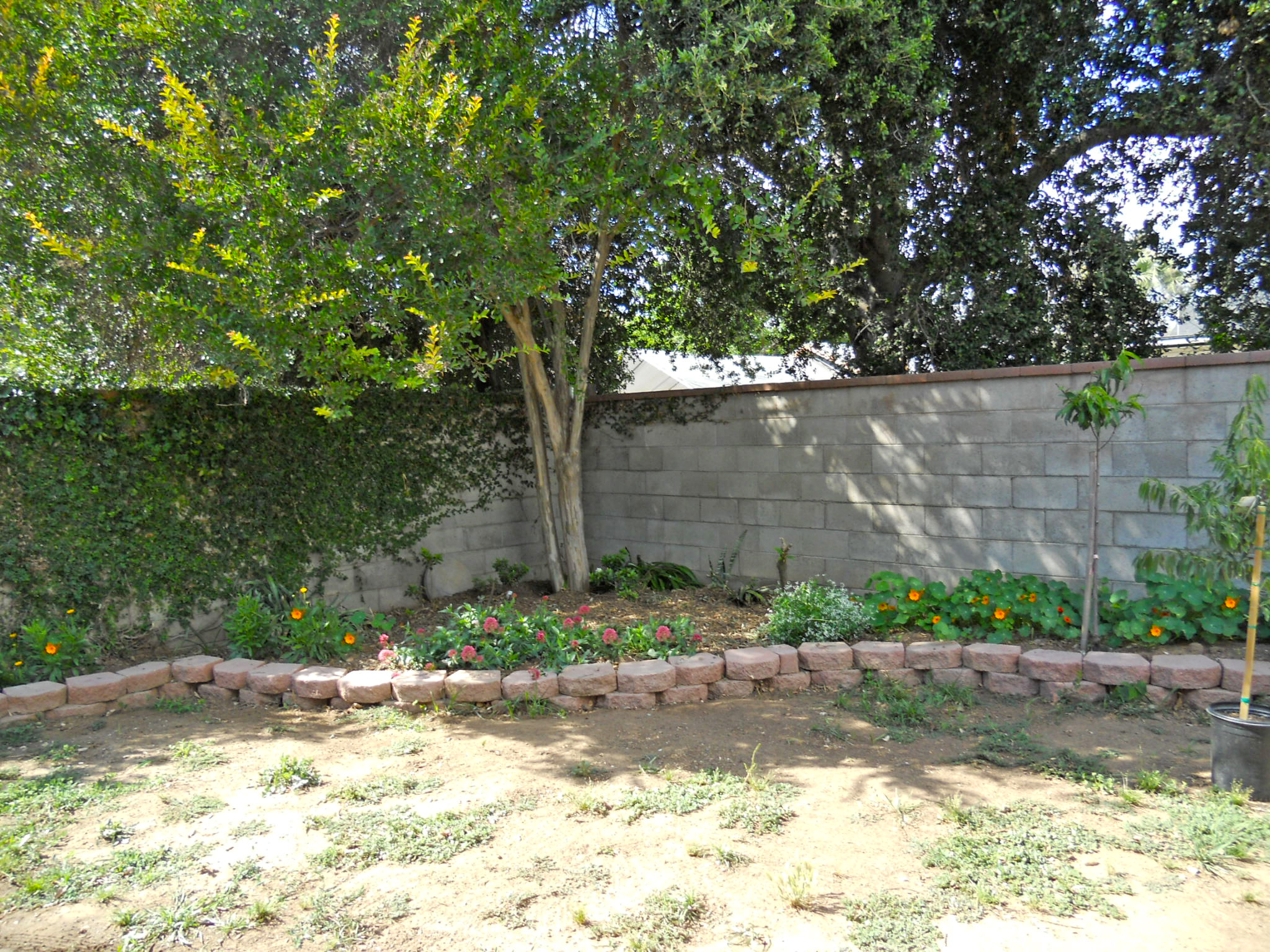 Portion of backyard privacy block wall and shade tree.