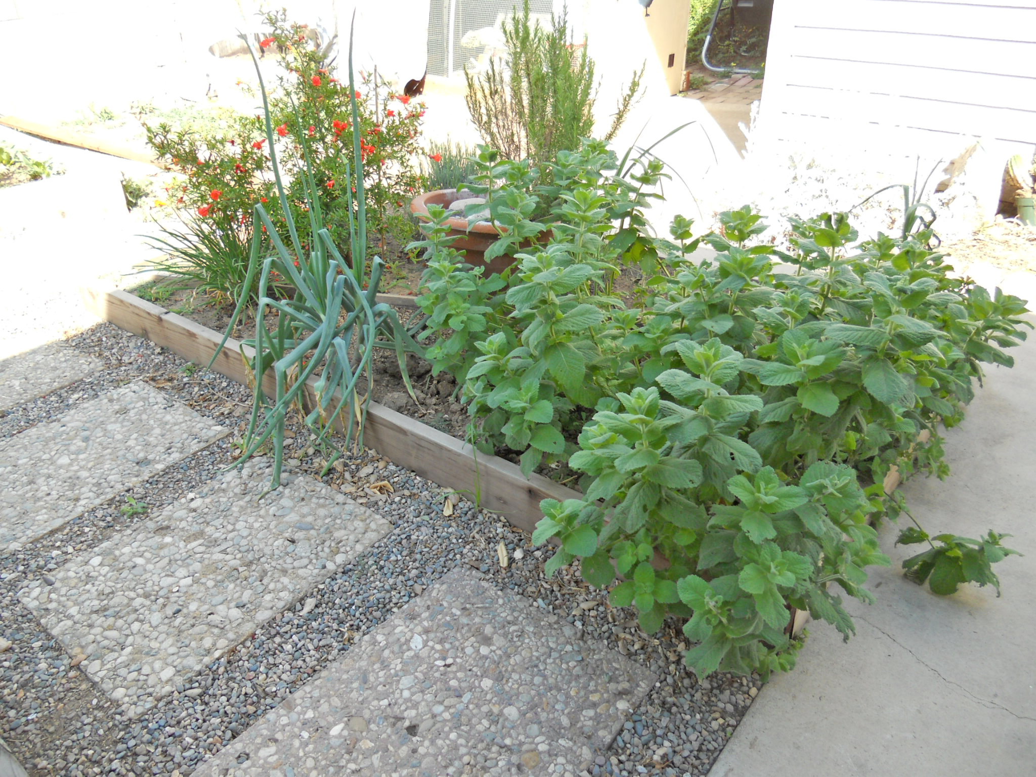 Portion of backyard is comprised of raised bed gardens.