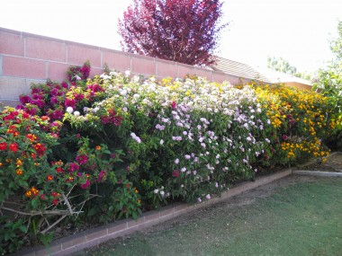 Private backyard concealed with block wall with one section covered with beautiful bushes that attract butterflies!