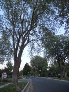 View of the gorgeous tree-lined street, reminiscent of a quiet New England town.