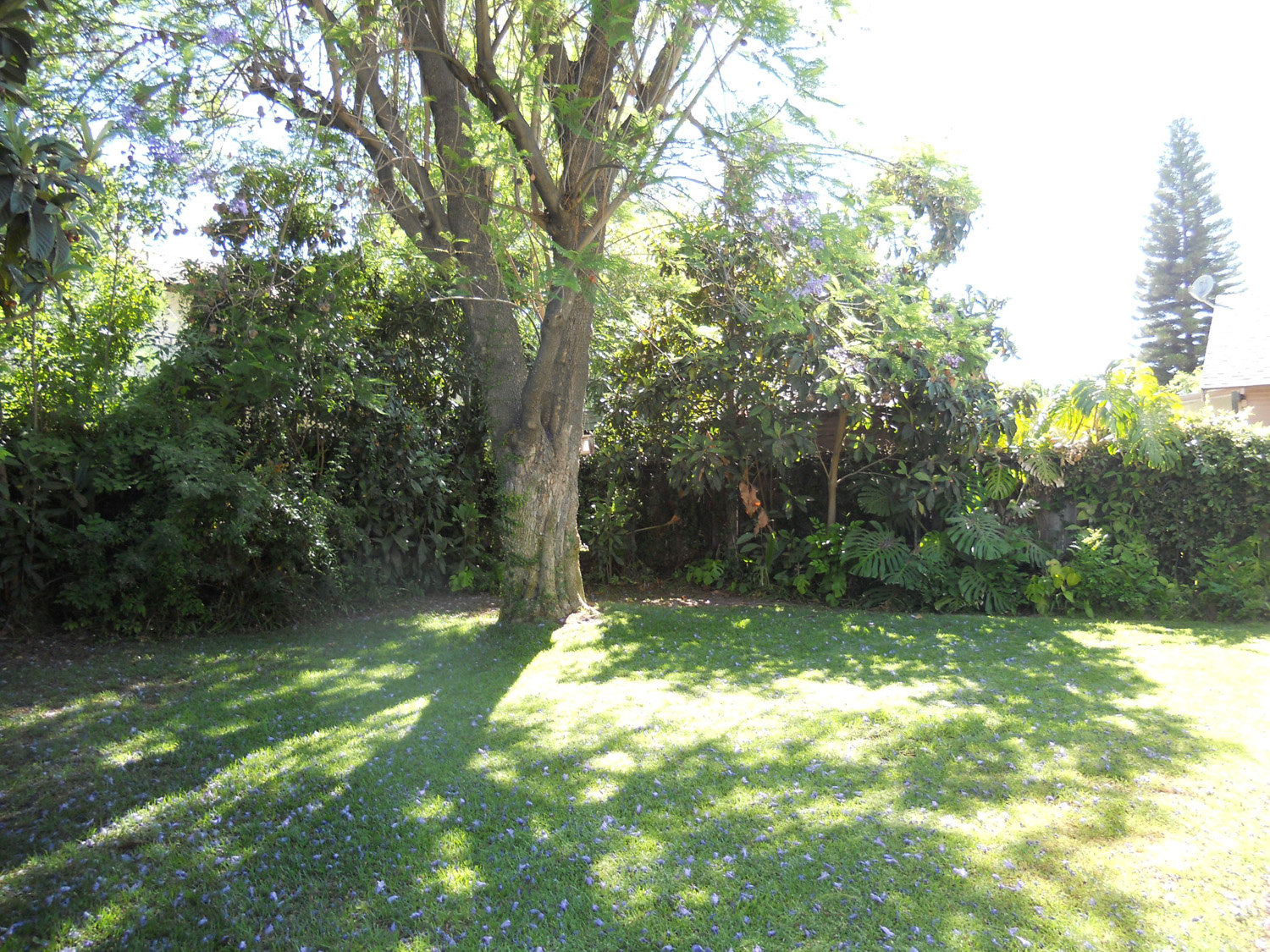 Shaded and private backyard with mature trees.