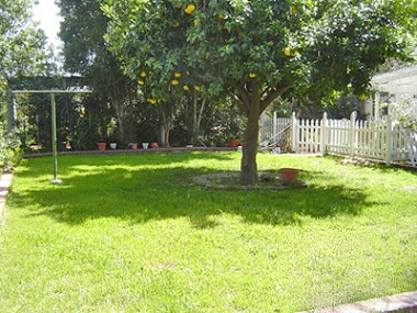 Spacious backyard with mature grapefruit tree which is separated from the large brick patio area by a white picket fence. Plenty of room for gardening too!