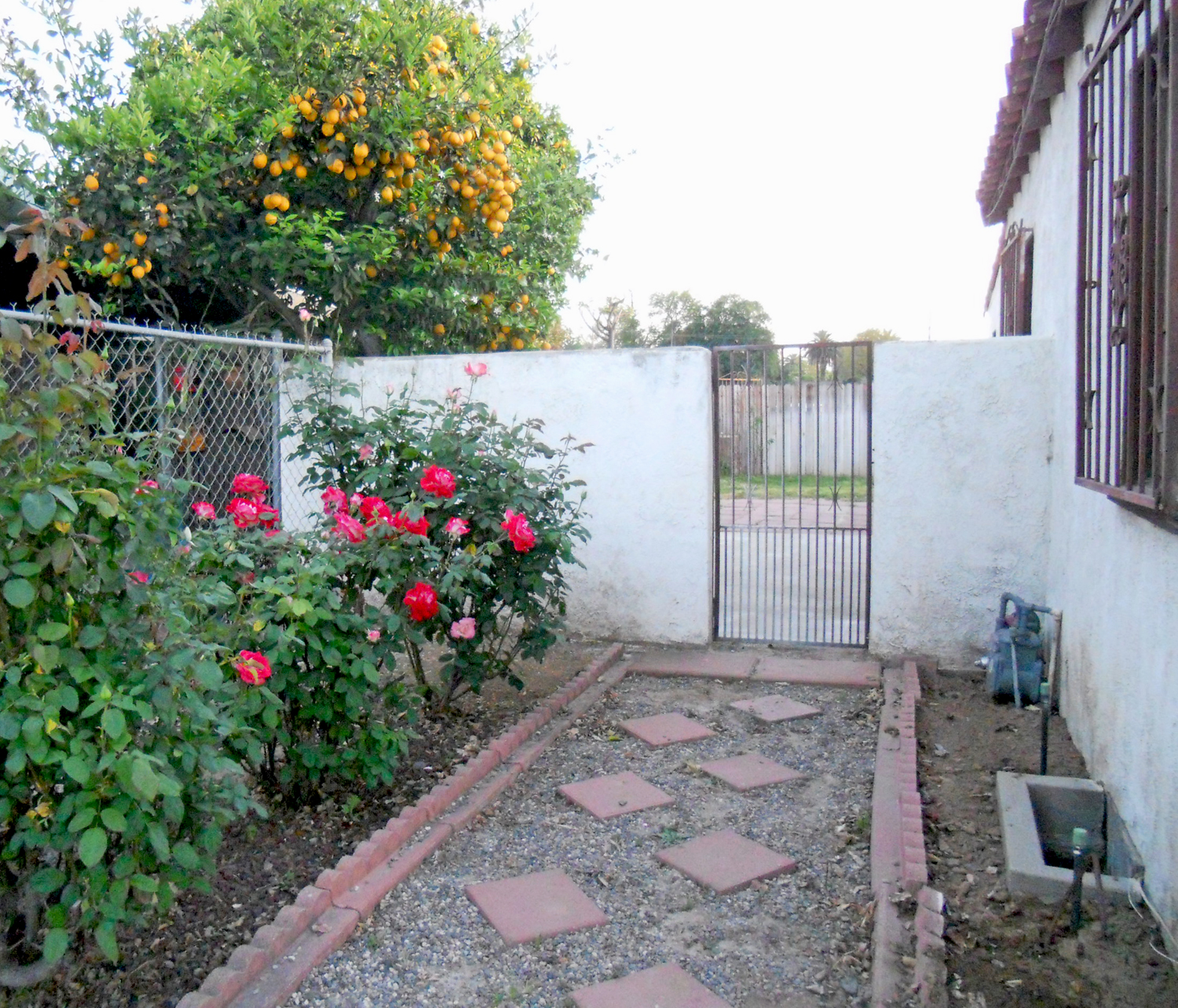Entrance to side yard with roses, pathway, and a wrought iron gate.