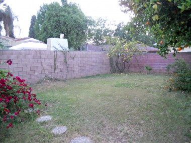 Backyard with citrus trees and a 2-car detached garage.