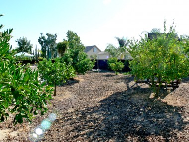 Your very own private orchard!!!
