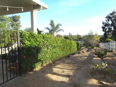 Other side of property with fruit/citrus  trees which leads to back of property as  well.
