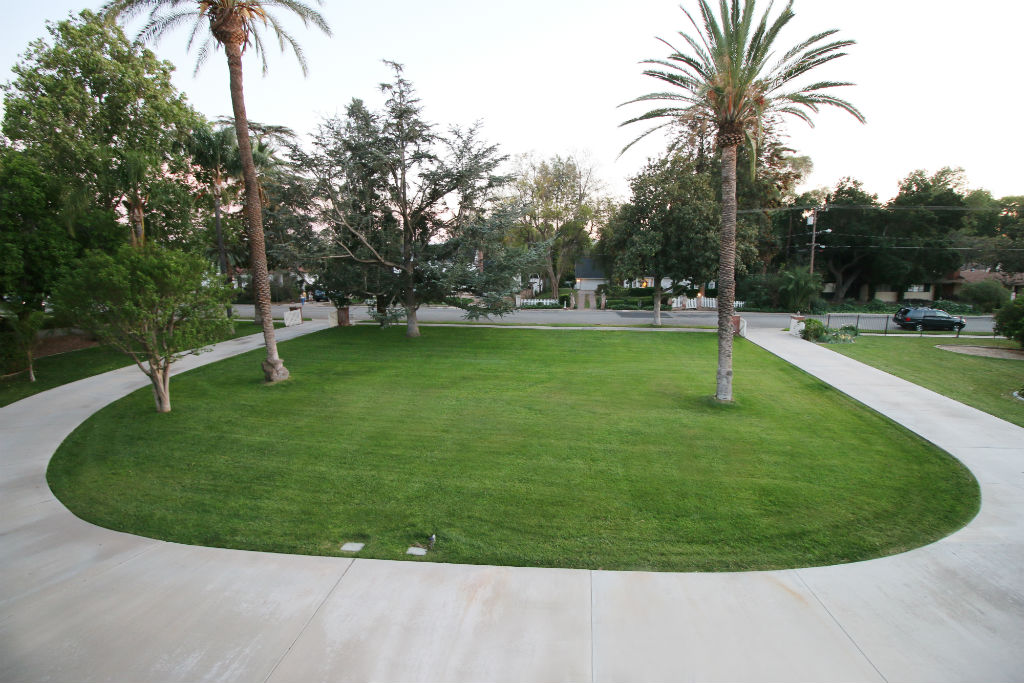 View of the expansive front yard with mature shade trees, citrus area and rose garden too.