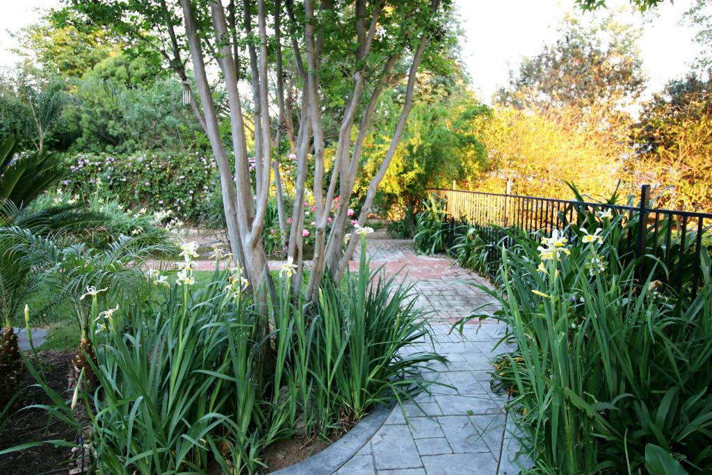 More lush landscaping and wrought iron fence separating front and back yards.