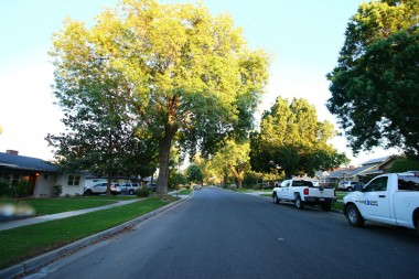 Beautiful and wide tree-lined street.
