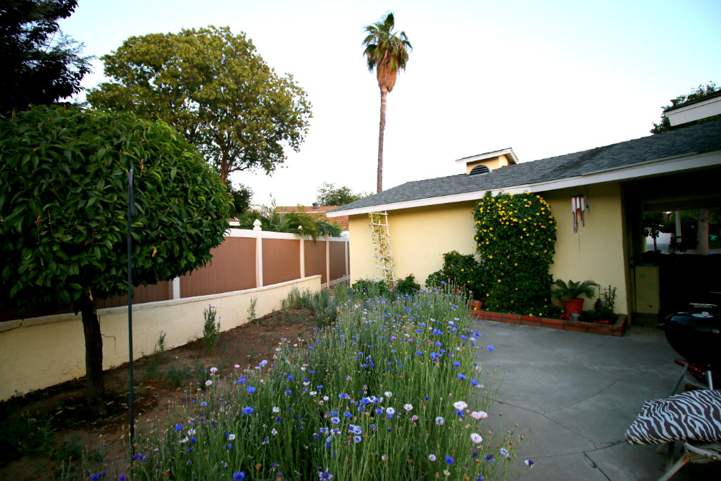 Nice little side yard with beautiful wild flowers and patio area for entertaining.