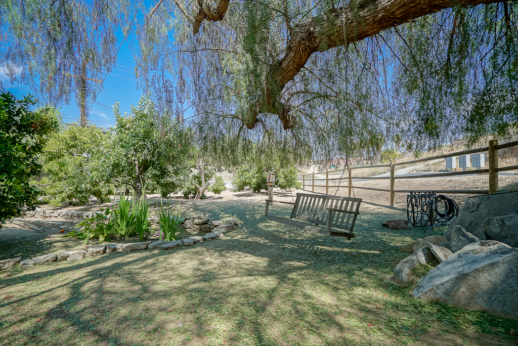 Large pepper tree with swing and natural boulders in the fruit tree orchard.