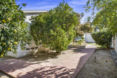 Citrus-lined walkway to the pool-size backyard.