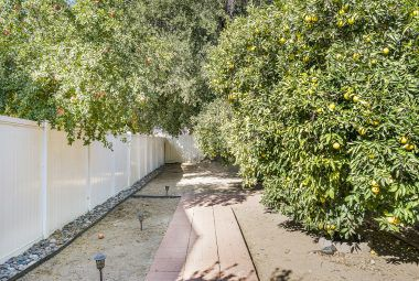 Alternate view of citrus-lined walkway to the pool-size backyard. Note the white vinyl fence.